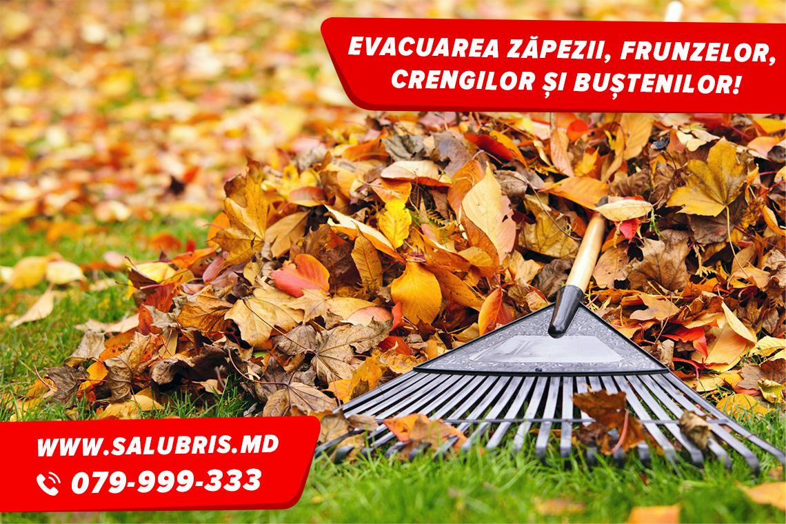 Evacuarea frunzelor, crengilor, copacilor în Chișinău