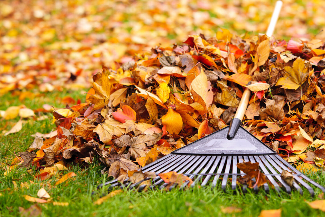 Вывоз листьев в Кишиневе